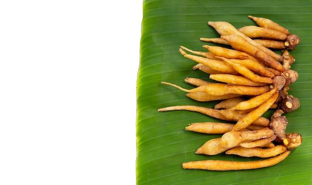Fingerroot sur des feuilles de bananier sur fond blanc.