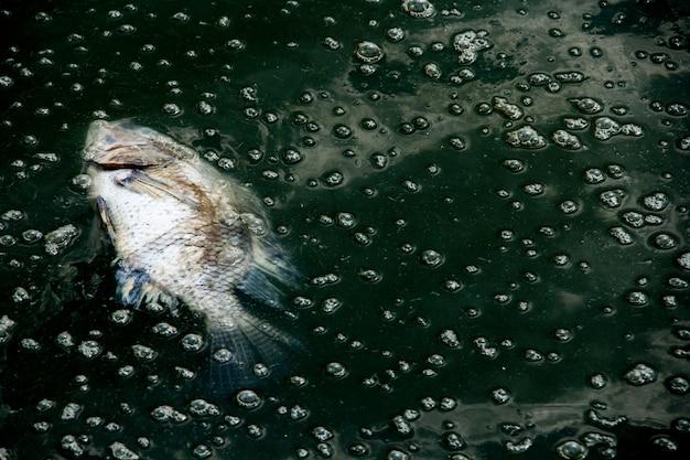 Fis mort sur les eaux usées