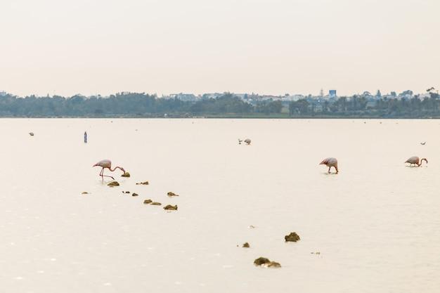 Flamant rose sur le lac