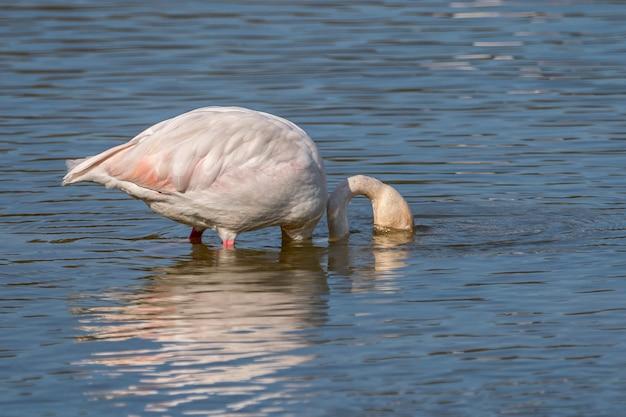 Flamants roses dans le parc naturel des marais
