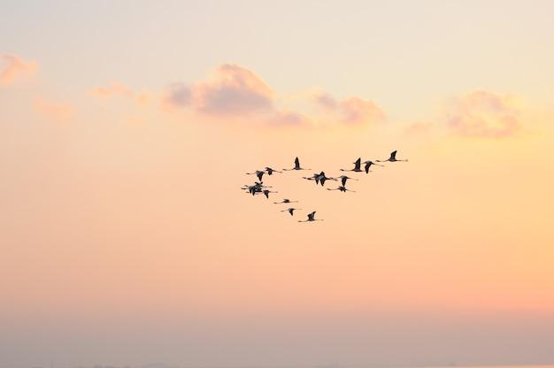 Flamants roses en vol oiseaux dans le ciel