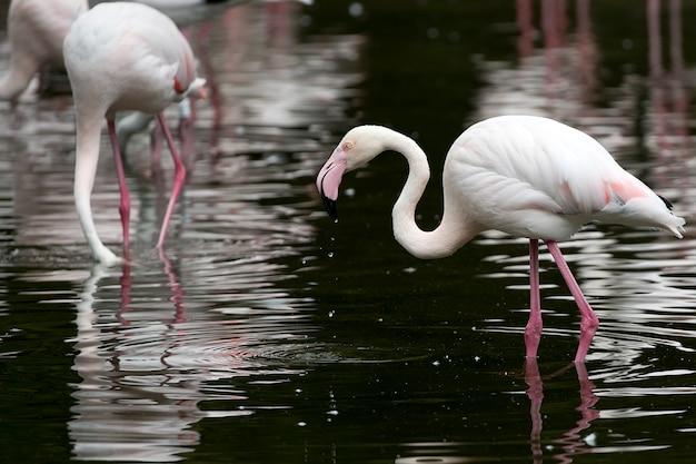 Flamingo dans le lac