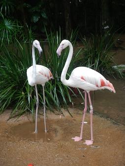 Flamingo dans le parc ornithologique à iguazu, brésil