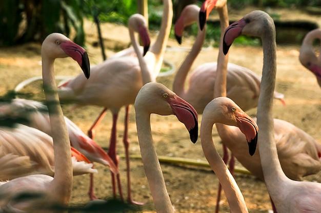 Flamingo est un très bel oiseau