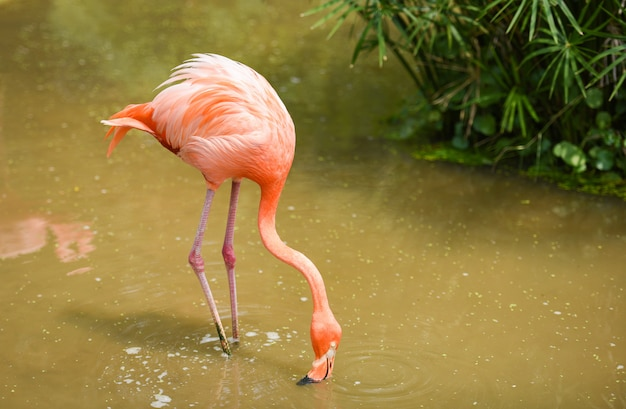 Flamingo orange sur la nature plante tropicale verte