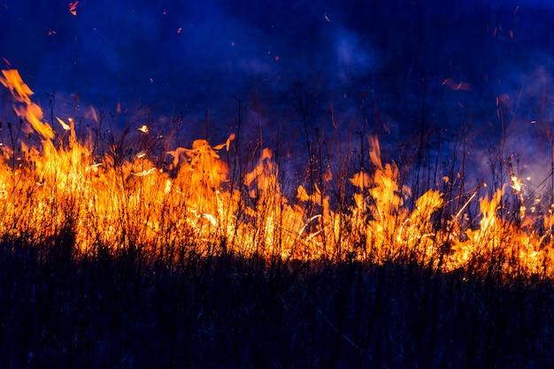 Les flammes brûlent l'herbe
