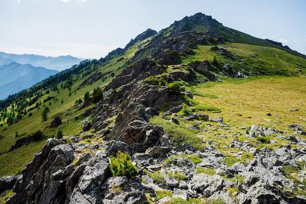 Flanc de montagne vert vif avec forêt de conifères et rochers.