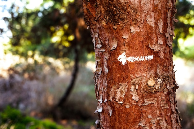 Une flèche indique la voie à suivre en matière de conservation de la nature