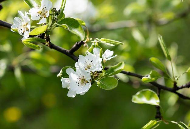 Fleur sur l'arbre, arbre en fleurs