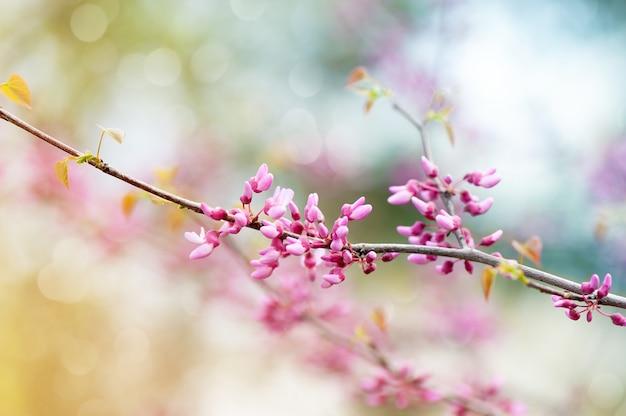 Fleur d'arbre rose dans le jardin. beau printemps