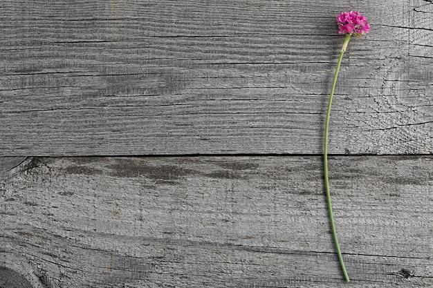 Fleur d'armeria en fleurs rose