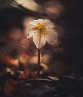 Fleur avec un arrière-plan flou