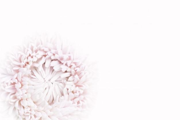 Fleur d'aster rose pastel douce pour le fond.