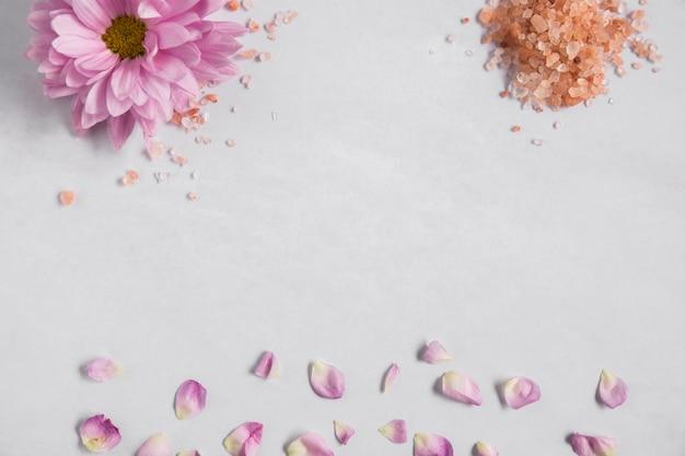 Fleur aster rose et sel de l'himalaya avec pétales sur fond blanc