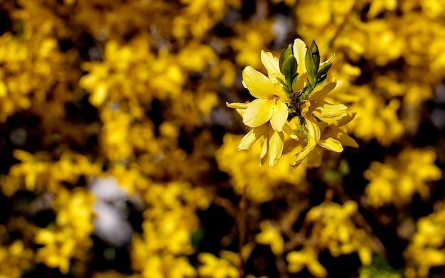 Fleur aux pétales jaunes
