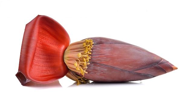 Fleur de bananier isolée