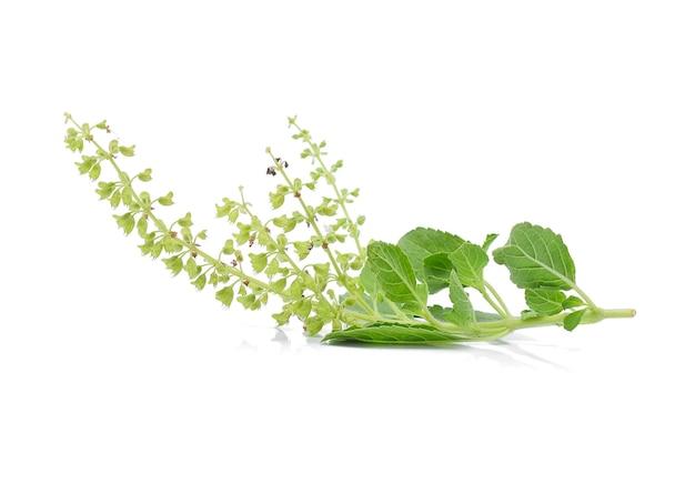 Fleur De Basilic Sur Fond Blanc Photo Premium