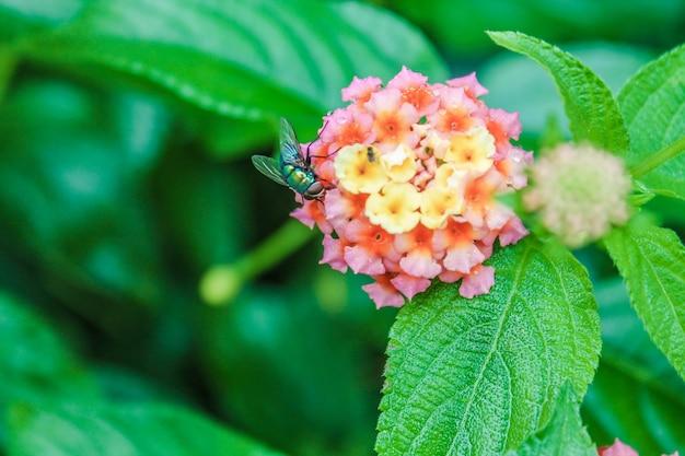 Fleur biologie guêpe météo nectar