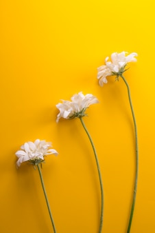 Fleur, blanc, trois, en ligne, fond jaune, latéral, vertical,
