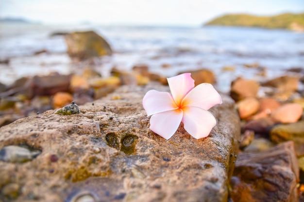 Fleur blanche est sur le rocher à la plage