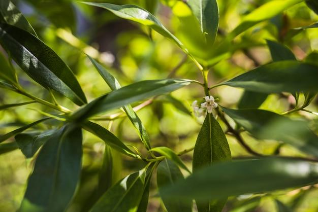 Fleur blanche sur les feuilles des arbres en toile de fond
