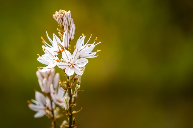 Fleur blanche sur fond vert défocalisé avec espace copie