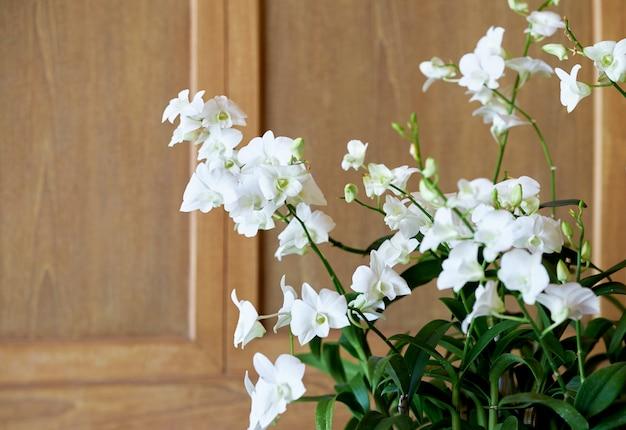 Fleur blanche en pot dans la chambre