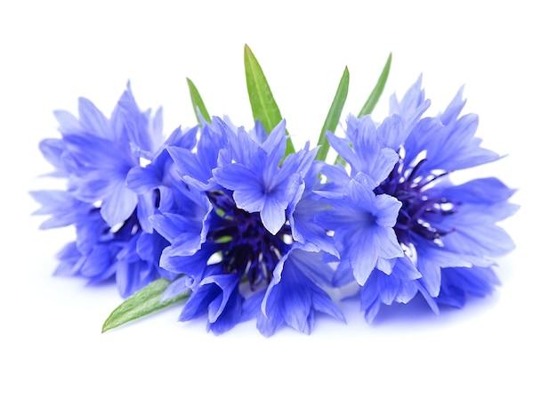 Fleur de bleuet isolé sur blanc