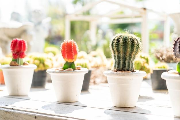 Fleur de cactus en pot