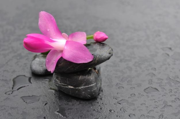 Fleur et cailloux noirs
