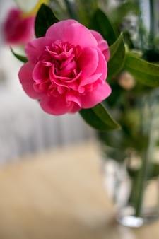 Fleur de camélia rose en pleine floraison au printemps