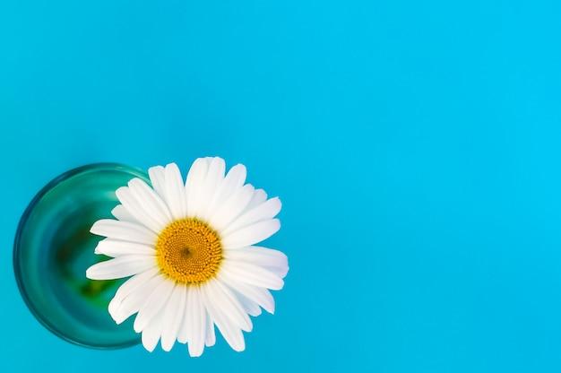 Fleur de camomille dans une vue en verre de haut sur un fond bleu dans le coin inférieur gauche.