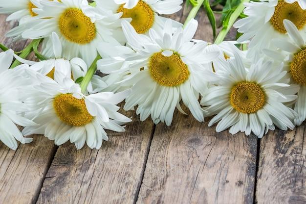 Fleur de camomille posée sur une table en bois