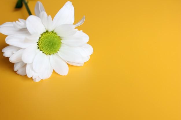 Fleur à centre jaune-vert à pétales blancs.