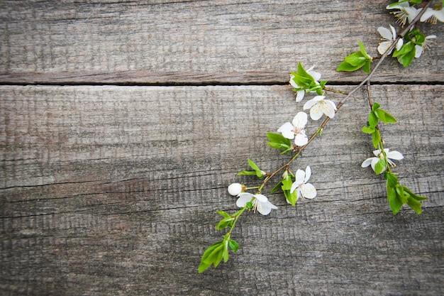 Fleur de cerise de printemps
