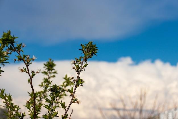 Fleur de cerisier au printemps sur fond de ciel bleu et de nuages