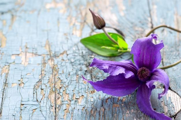 Fleur de clématite sur un vieux fond en bois