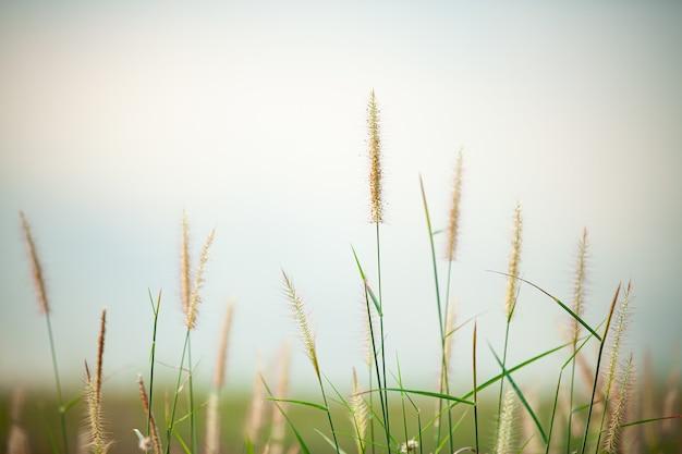 Fleur colorée et flou sur la prairie d'été.