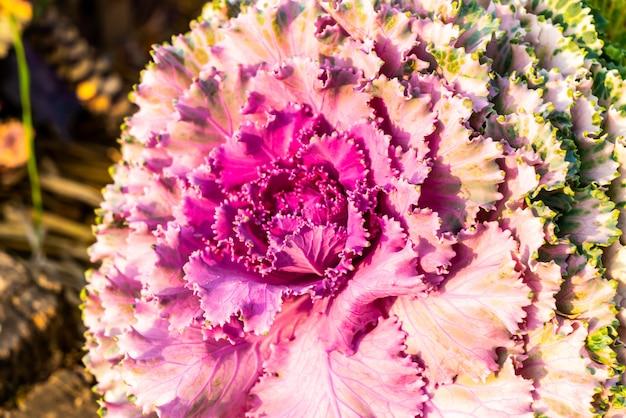 Fleur de couleur rose et violet