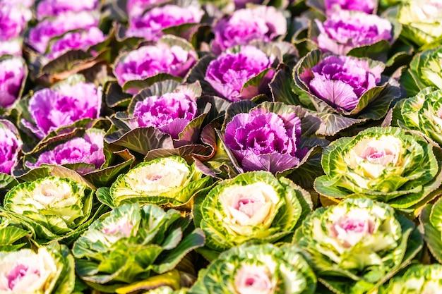 Fleur de couleur verte et violette