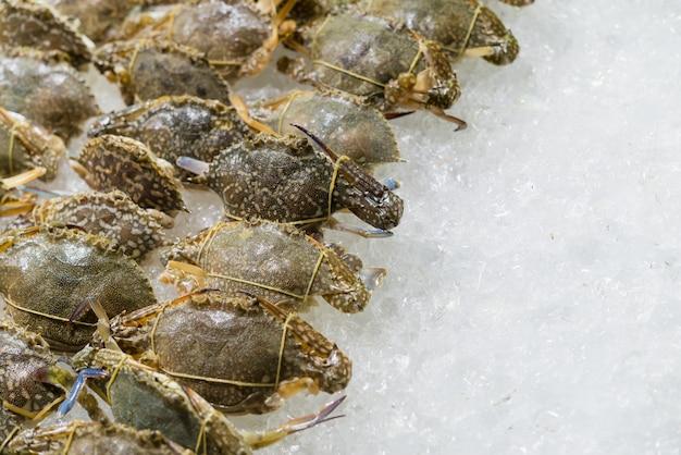 Fleur de crabe, crabe bleu, crabe nageur bleu, crabe des chevaux, crabe des sables sur la glace.