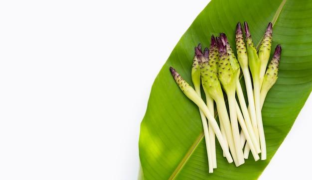 Fleur de curcuma sessilis sur feuille verte sur fond blanc.