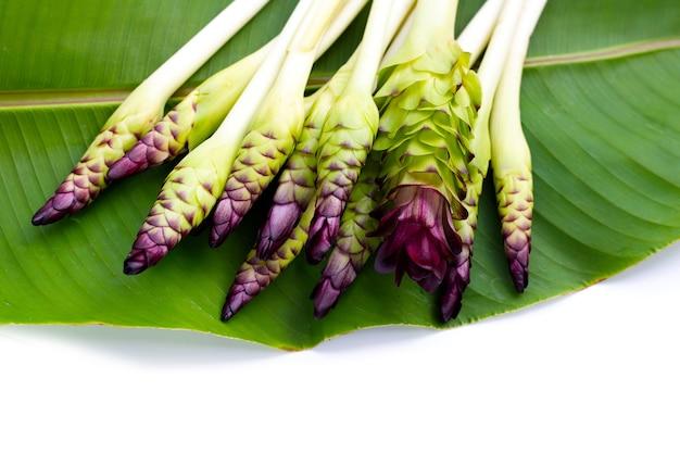 Fleur de curcuma sessilis sur feuille verte