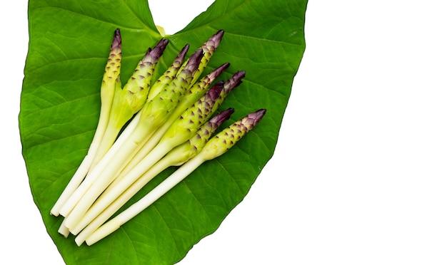Fleur de curcuma sessilis sur fond blanc de feuille de taro.