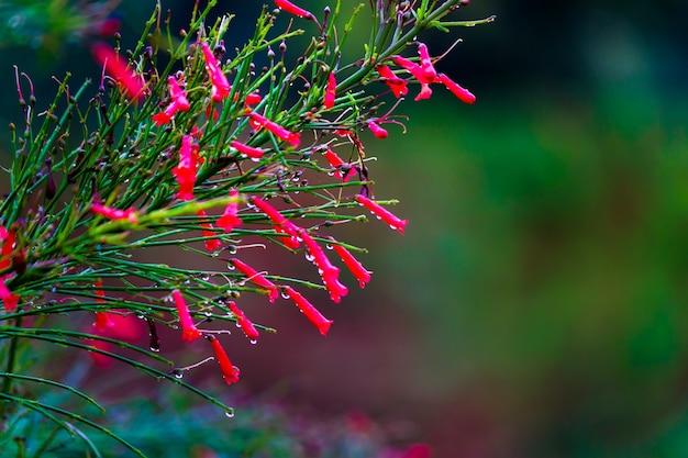 Une fleur dans un fond de natures naturelles qui fleurit dans le reflet de la lumière naturelle