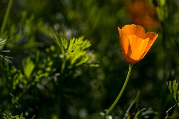 Fleur dans le jardin