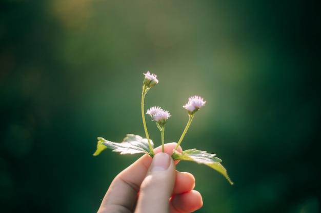 Fleur dans la main