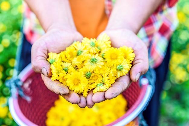 Fleur dans les mains des agriculteurs