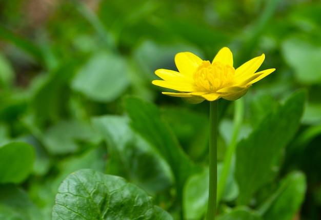 Fleur dans le parc du printemps