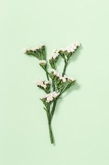 Fleur décorative sèche naturelle limonium, feuilles et petite fleur sur vert tendre. art floral